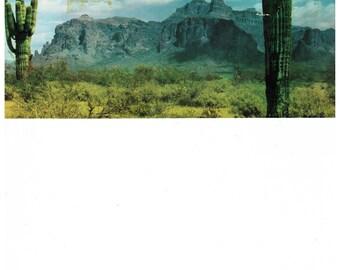 Vintage Saguaro Cactus Postcard 1950s Color Postcard Desert Landscape Tucson Arizona