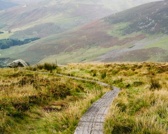 Wicklow Mountain path - photography print - Ireland photography - 5x7