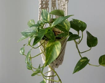 Macrame Wall Plant Hanger - Small/Medium Planter