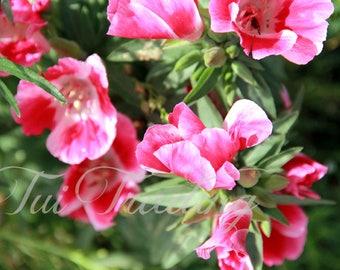 Pink Flower Photo, Digital Instant Download, Postcard Image, Printable Cards