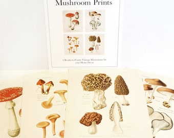 Mushroom Print Set. Botanical Champignons French Fungi Charts Set of 4. Vintage Diagram Kitchen Art Morels Chantrelles Magic Mushrooms CP286