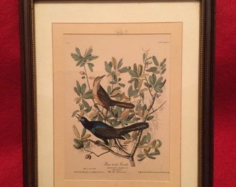 Boat Tailed Grackle by J.J. Audubon #38