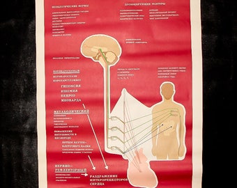 Human heart school poster medical anatomy color illustrations poster in russian vintage medical gift collectible poster medical student