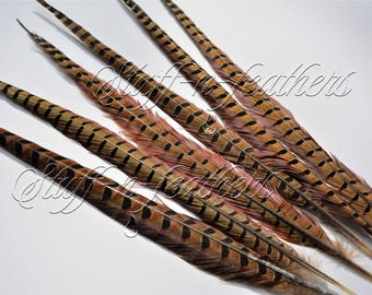 Extra long natural brown feathers RINGNECK pheasant tail feather, real feathers loose for millinery crafts, 20-22 in long, 6 pcs / F151-20