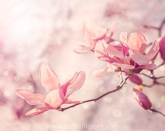 Pink Wall Art, Shabby Chic Decor, Pink Bathroom Decor, Flower Wall Art, Pink Bedroom Art, Shabby Chic Wall Art, Magnolia Photo, Pink Decor
