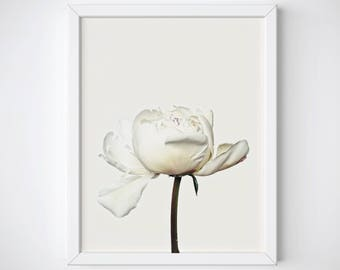 Peony Art Print, Peony Wall Art, Botanical Vintage Art Print, Floral Art Print, Peony Photography, Botanical Wall Art