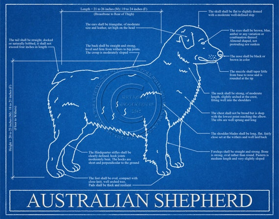 Australian shepherd blueprint elevation australian shepherd like this item malvernweather Images