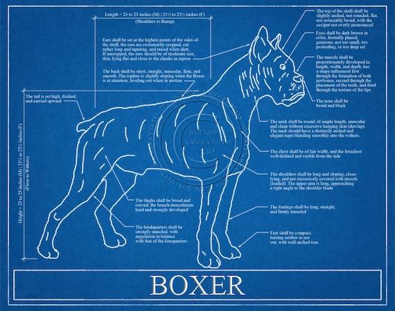 Boxer dog blueprint elevation boxer dog art boxer dog wall malvernweather Gallery