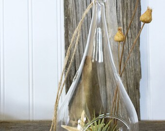 Teardrop Glass Orb with Tillandsia by Zentilly©