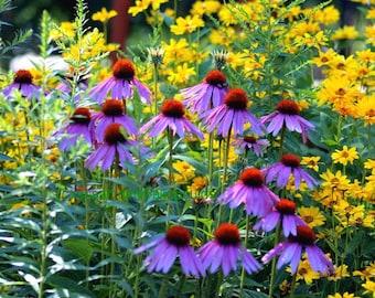 Flower art Harmony Garden Print Nature Art Wildflowers Black Eyed Susans Coneflower Wall Art Floral Garden Purple Yellow Mixed Flowers