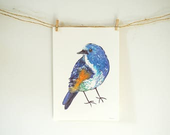 Poster of a colorful Himalayan Bluetail bird (animals, poster a4, decorations, illustration)