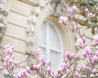 Paris Photography - Magnolia Blossoms and Window, Spring in Paris, Gallery Wall, Paris Art Print, Travel Fine Art Photograph, Large Wall Art