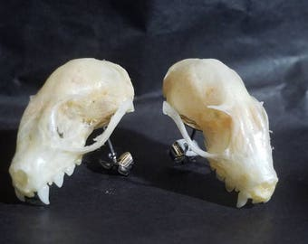 Real bat skull stud earrings!