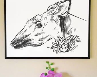 Okapi and African Daisy Art Print