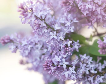 spring lilacs photo-flower photography - flower photo- cottage garden photography -Original fine art photography prints- FREE Shipping