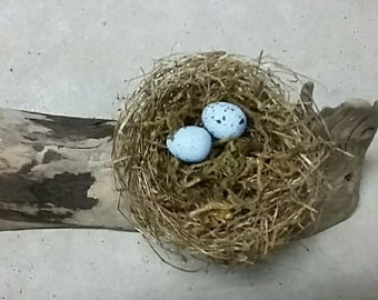 Real, Natural, Tiny and Large Birds Nests with Eggs