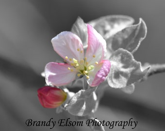 Flower Photography Apple Blossom Color Pop Photography Pink Flower Wall Decor Office Decor Nursery Decor Wall Hanging