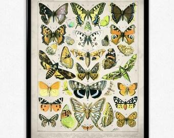 Butterflies Vintage Print 3 - Butterflies Poster - Butterfly Art - Home Decor - Home Art - Kitchen - Kitchen Art (VP1061)