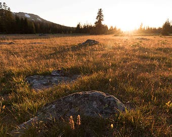 Golden Meadow- landscape photograph - nature wyoming west western sunset dusk mountains grasses