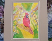 Cardinal Watercolor Fine Art Print, Double Matted In Beige, Bird, Nature, Illustration, Painting, Red, Wildlife, Animals, Red, Yellow, Tree