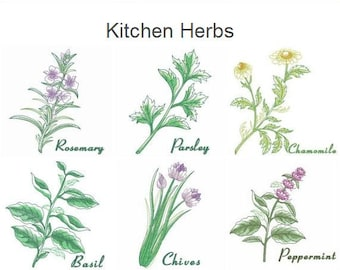 Kitchen Herbs Machine Embroidery Designs Instant Download 4x4 5x5 6x6 hoop 10 designs SHE5166