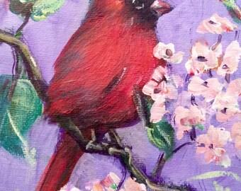 Red cardinal bird no.4 painting original art 5 x 7