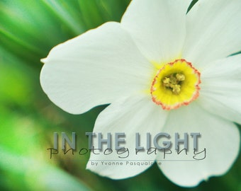 CLEARANCE White Spring Flower - 8x10 Fine Art Photo with Foamboard
