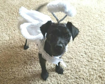 "Dog Costume,  ""Angel"" Dog Costume, Halloween For Pets,"