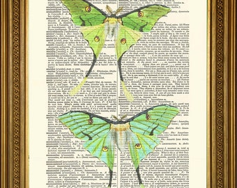 """GREEN LUNA MOTHS: Beautiful Moon Moth Vintage Dictionary Book Page Antique Art Print Wall Hanging Gift (8 x 10"""")"""