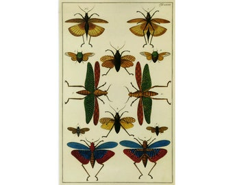 Bugs Flying Insects Vintage Book Plate