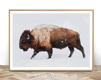 Buffalo Print, Bison Wall Art, Photo, Poster, Photography,