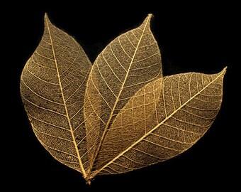 Gold Skeleton Leaves