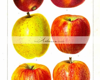 Digital Download Printable Art - Vintage Apples Art Image - Paper Crafts Scrapbook Altered Art - Rustic Farmhouse Apple Art Fruit Tree Art