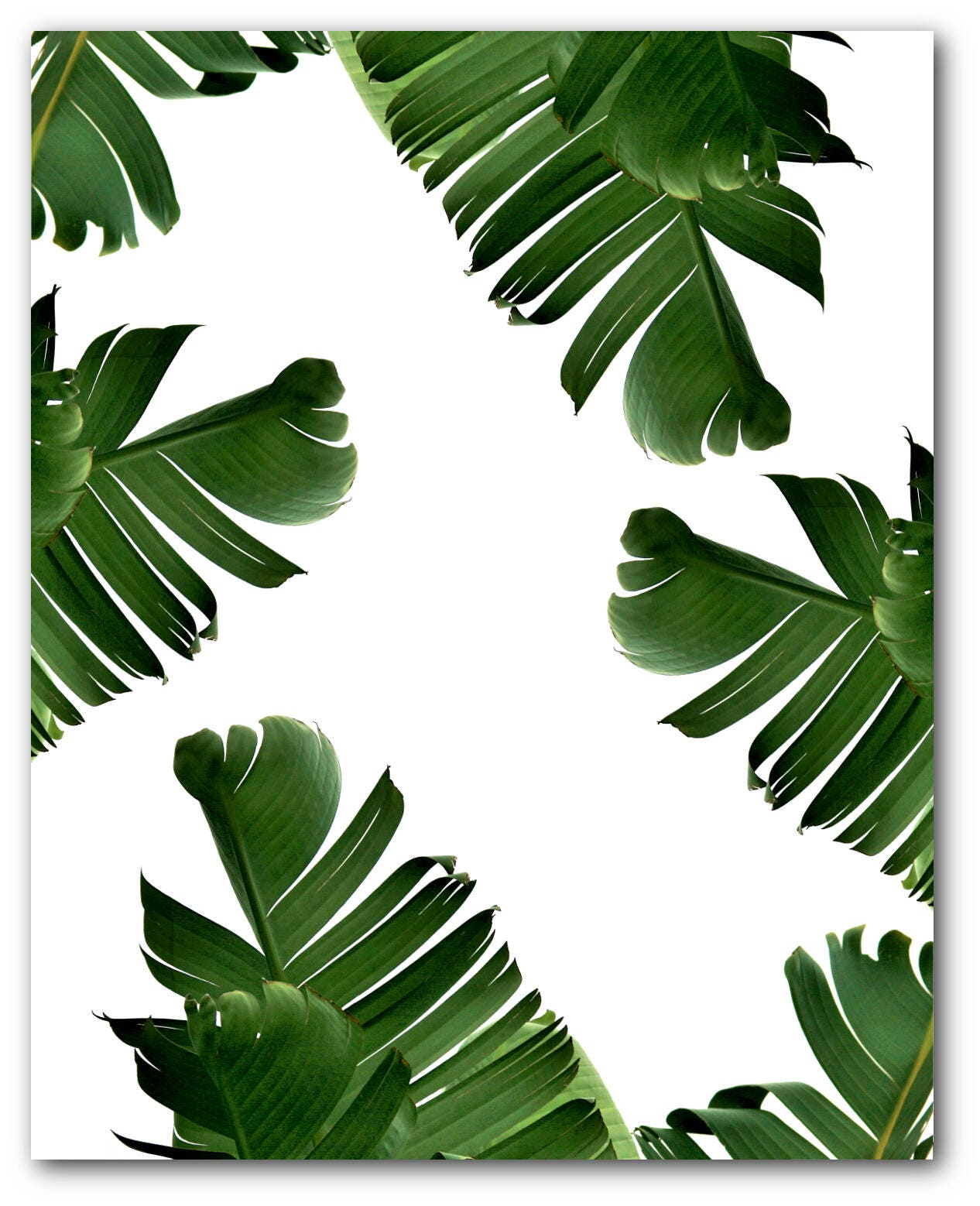 banana leaf print abstract tropical leaf summer art. Black Bedroom Furniture Sets. Home Design Ideas