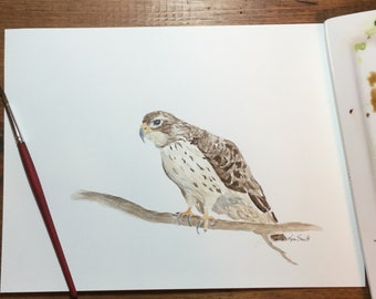 Watercolor Red Tailed Hawk