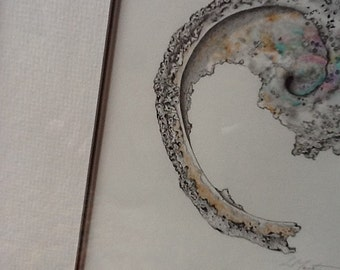 Red Abalone, smashed. Watercolor print