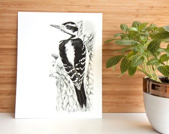 Hairy Woodpecker 8x10 PRINT