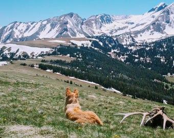 Chloe, Western Art, Western Landscape, Montana, golden retriever photography, alaskan husky photo print