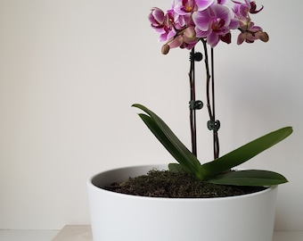 Orchid in Planter - with bark and moss