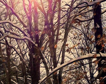 Snow in the Branches at Sunrise