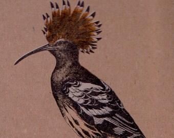 European Hoopoe Bird Notepad