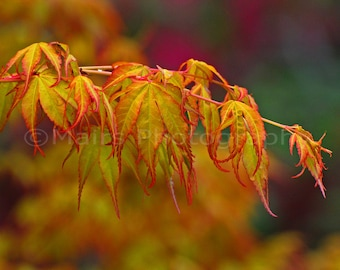 Cottage Decor Springtime Delicate Graceful Orange Yellow Green Tree Leaves Nature Fine Art Photography signed matted 5x7 original photograph