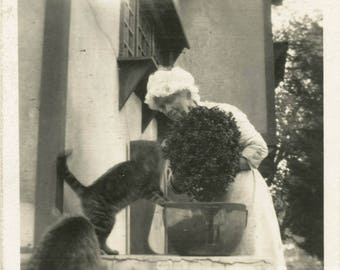 vintage photo 1920 Woman Watering Plants w Cats into Mischief