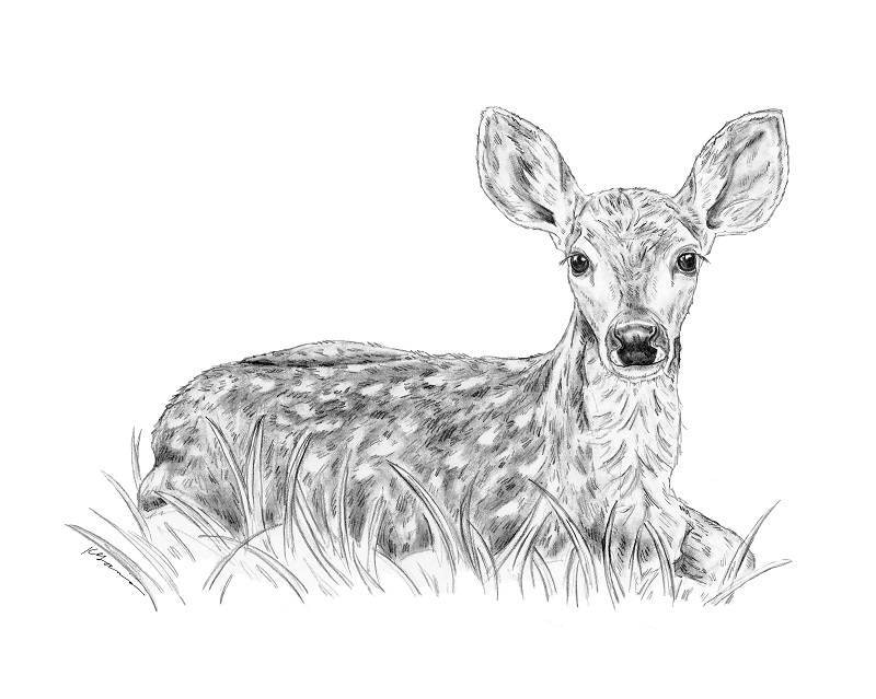 Line Drawing Deer : Red deer drawing at getdrawings free for personal use