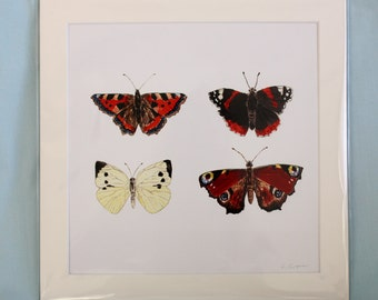 Print of British Butterflies / square