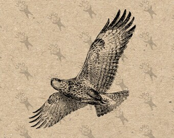 Vintage image flying Falcon Eagle Instant Download Digital printable Black and White clipart graphic decoupage burlap transfer etc HQ300dpi
