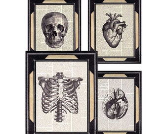 HUMAN ANATOMY 4 art prints wall decor anatomical Skull Heart Brain Ribcage medical science doctor on vintage dictionary book page 8x10, 5x7