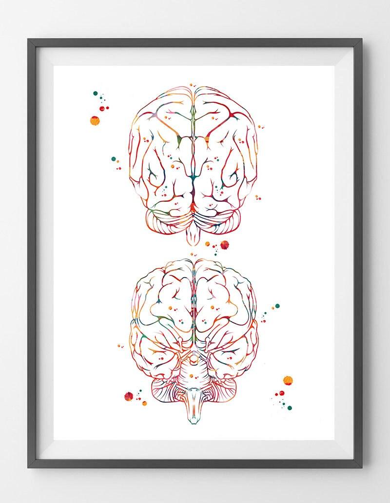 Gehirn Kunst Druck Anatomie des Gehirns Vorder und