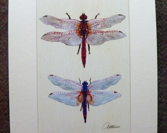 Dragonfly Picture Dragonflies Wall Art Dragonfly Painting Dragonfly Decor Dragonfly Artwork Dragonfly Furnishing Dragonfly Gift, very pretty