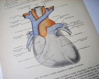Heart diagram wall art anatomy print science poster wall hanging anatomical heart anatomic heart human heart